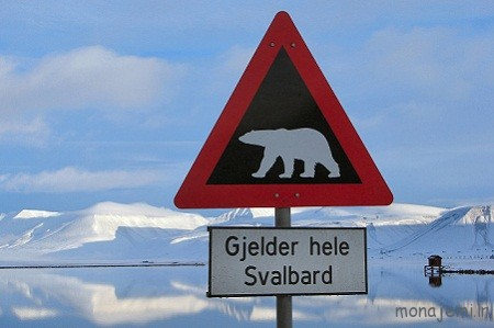 Polar-Bear-Warning-Longyearbyen